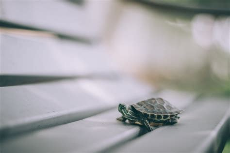 Slow and Steady Wins the Race – Building Habits the Right
