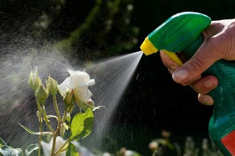 Pesticide that paralyzed a family is commonly used in