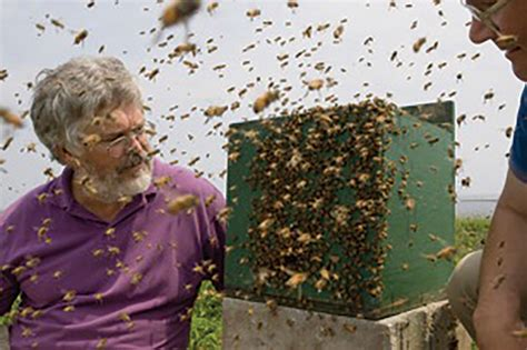 Flight Guidance Mechanisms Of Honey Bee Swarms: How They